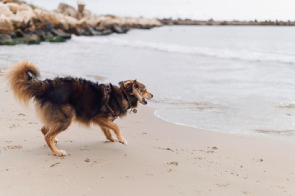 La playa de Almuñécar tendrá un espacio para perros